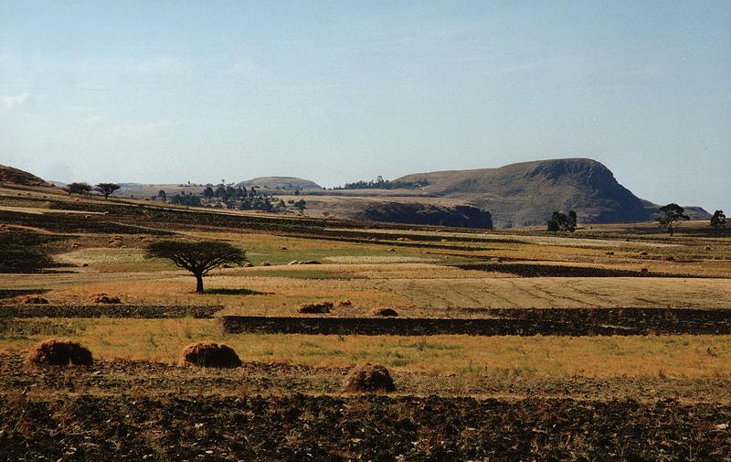 Paysage de champs et de cultures, Ethiopie, février 2000