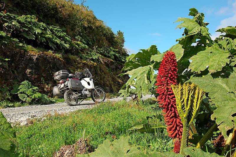 Végétation luxuriante sur la Carretera Austral, Puyuhuapi, Chili - 2014