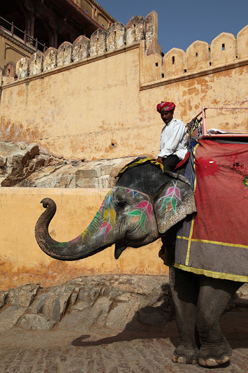 Fort d'Amber, éléphant et son cornac - Amber, Inde 2012