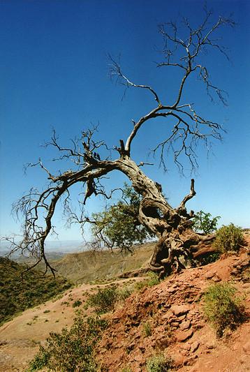 Arbre mort, environs de Lalibela, Ethiopie, février 2000