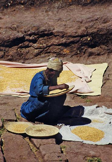 Tri de la récolte de céréales, Lalibela – Ethiopie, février 2000