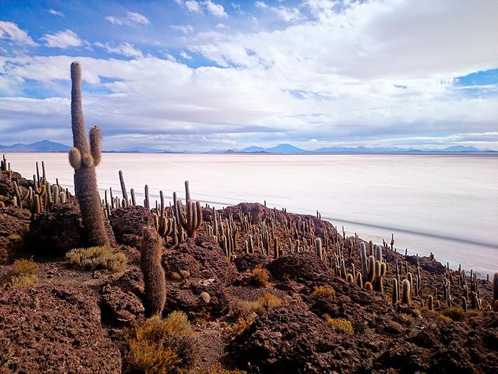 L'île aux cactus, Isla Incahuasi, salar d'Uyuni, Bolivie - 2014
