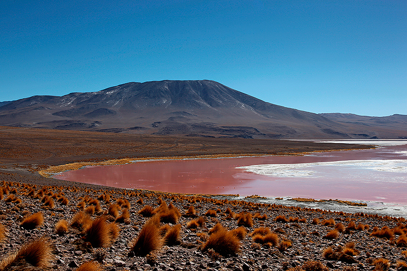 La laguna colorada, Sud Lipez, Bolivie - 2014