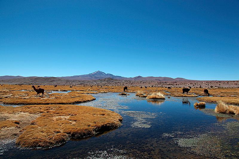 Paysage de lagunes, Sud Lipez, Bolivie - 2014