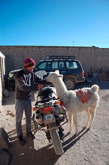 Un alpaga très affectueux, Quetena Chico, Bolivie - 2014 (photo Patrick mac Entee)