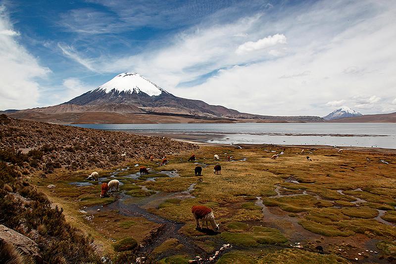 Le lac Chungara et le volcan Parinacota, Chili - 2014