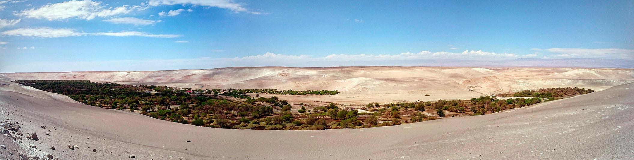 Quillagüita, oasis dans le désert d'Atacama, Chile - 2014