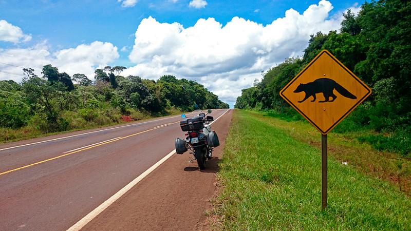 Traversée de Coatis, en route pour Puerto Iguazu, Argentine - 2014