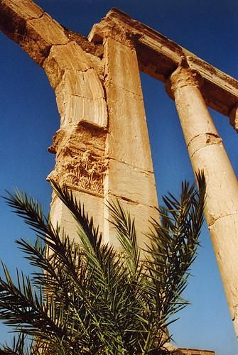 Contraste entre la pierre et la végétation, grande colonnade, site de Palmyre, Syrie, 1996