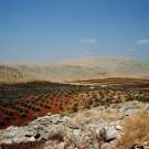 Champs d'oliviers et collines calcaires au nord-ouest d'Alep, Syrie, 1996
